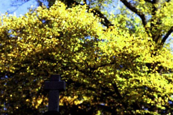秋天的十字架