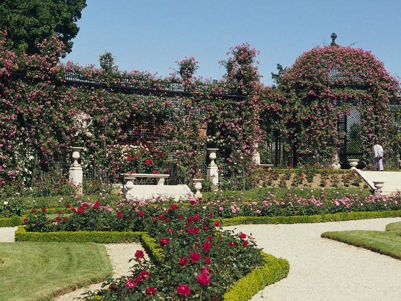 馬恩河谷玫瑰花園一景