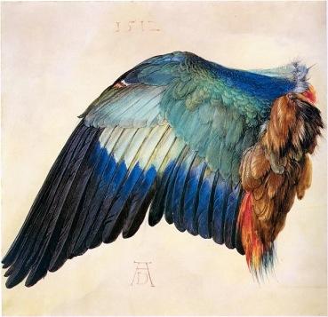 杜勒(Albrecht Dürer, 1471-1528),藍腹佛法僧翅膀,水彩與不透明水彩,1512年。