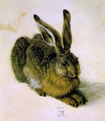 杜勒(Albrecht Dürer, 1471-1528),兔子,水彩,1502年。