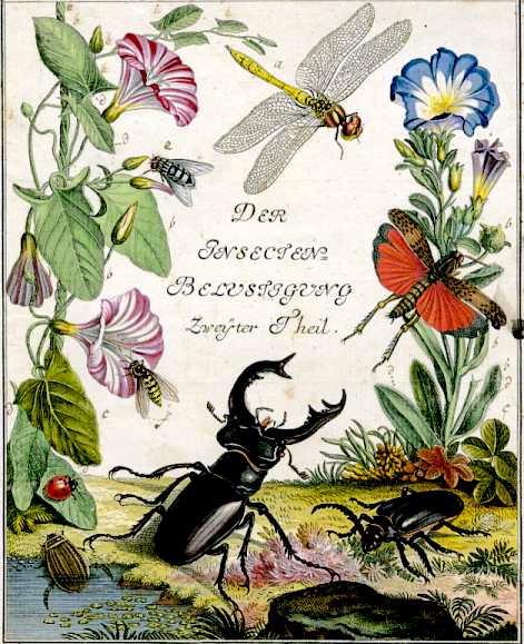 羅瑟第一本生物誌《有趣的昆蟲》(Insecten-Belustigung)第二部分書名插圖頁。