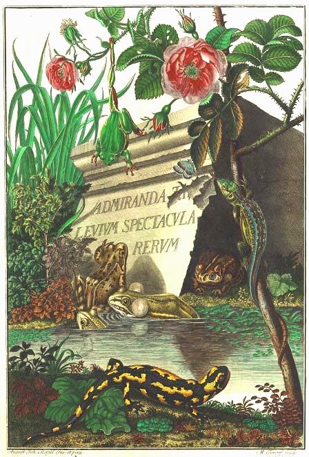 羅瑟大作《德國青蛙博物誌》(Historia naturalis Ranarum nostratium)書名插圖頁。