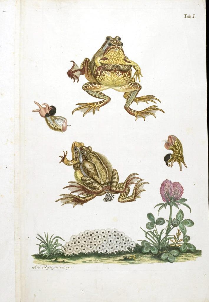 《德國青蛙博物誌》(Historia naturalis Ranarum nostratium)內頁第一張插圖。