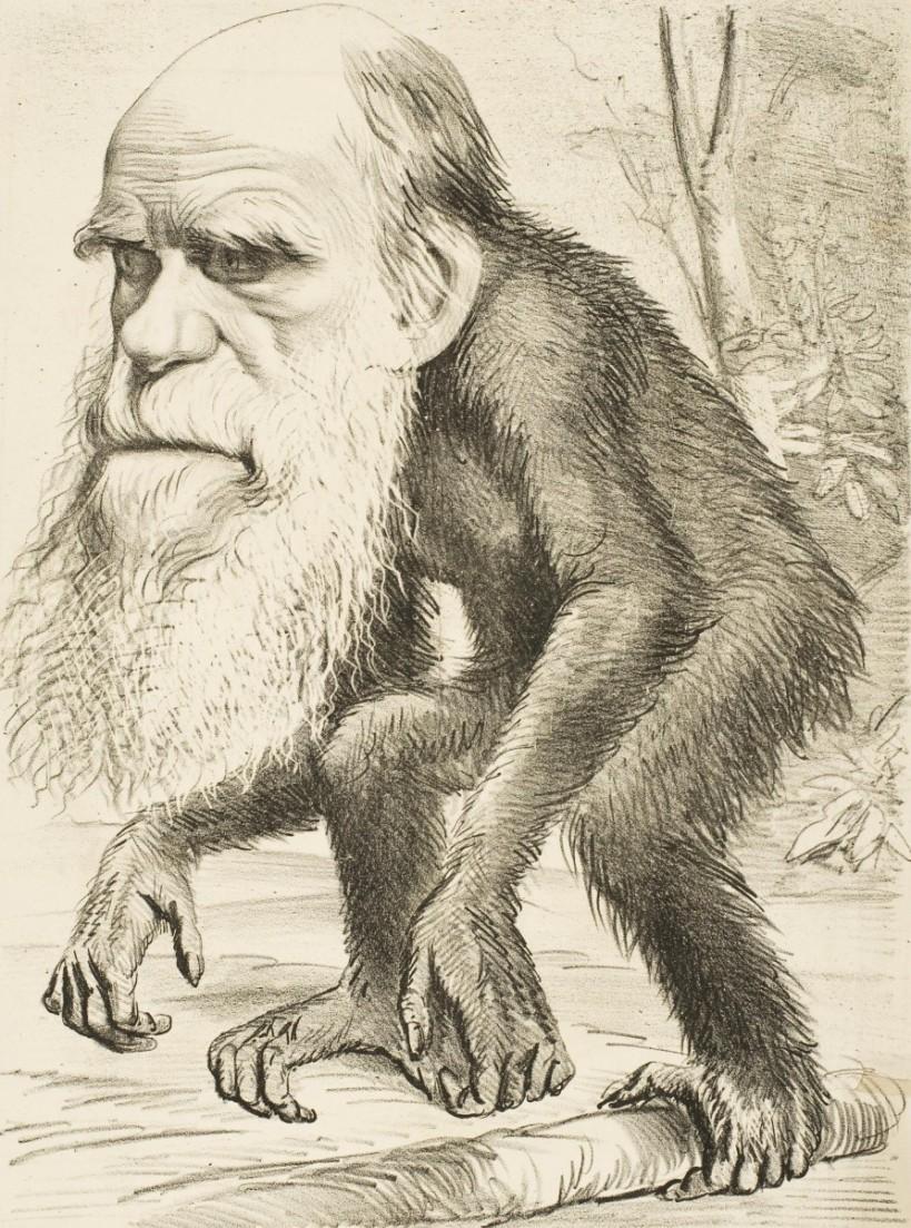 《人類的起源》出版後,當時的諷刺畫報將達爾文與猿猴結合成一體,藉以嘲諷他的自然選擇理論。出自1871年《虎頭蜂》(The Hornet)。