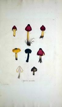 真菌(FUNGUS)
