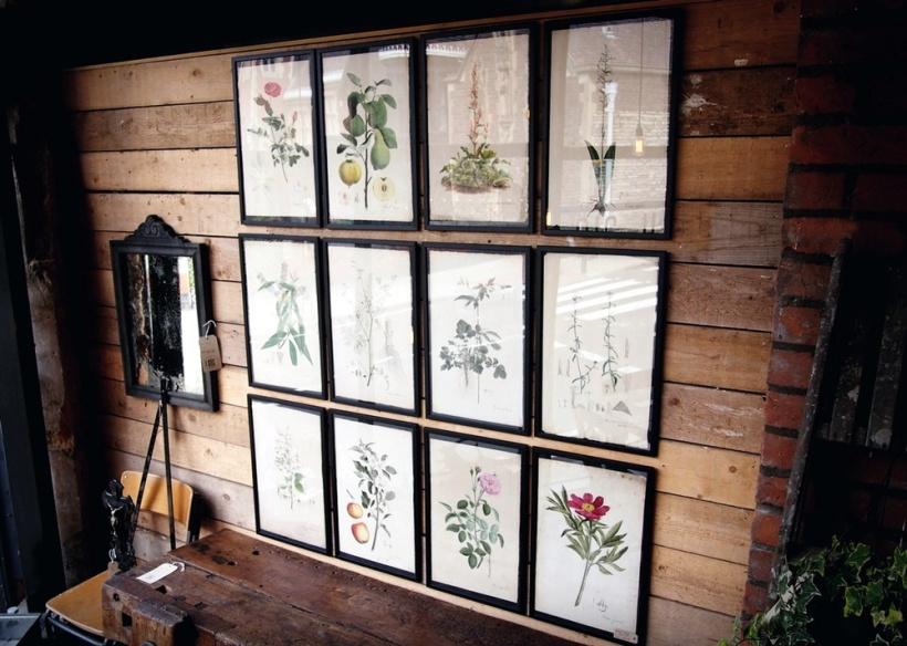 成為牆上裝飾的植物圖鑑插圖