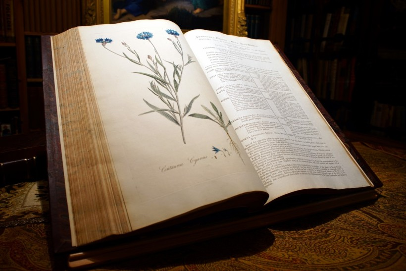 《倫敦花卉》內頁。