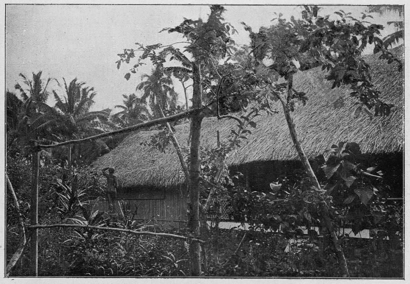 Agostini_-_Tahiti_plate_page_0080