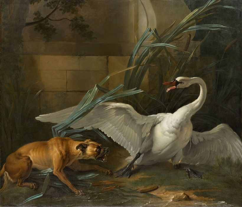 OUDRY_Swan_attacked_by_a_dog